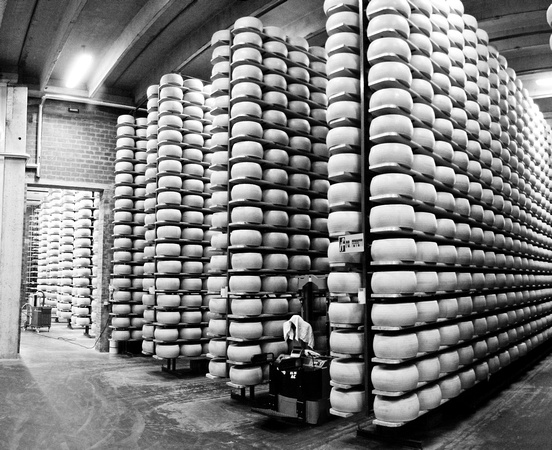 Grana Padano production at PLAC, Persico Dosimo, Cremona